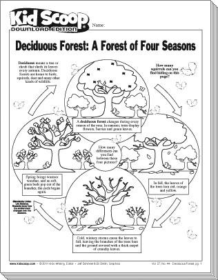 Deciduous Forest | Kid Scoop
